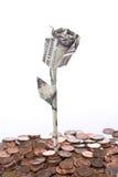 изолированный доллар поднял Стоковая Фотография RF