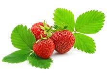 изолированный зеленый цвет плодоовощей листает красная клубника Стоковые Фотографии RF