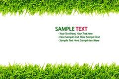 изолированный зеленый цвет травы рамки Стоковое Изображение RF