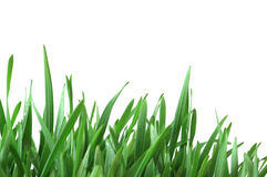 изолированный зеленый цвет травы Стоковые Изображения RF