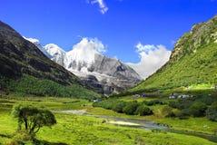 изолированный зеленым цветом вал ландшафта Стоковые Фото