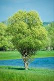 изолированный зеленым цветом вал лета Стоковое Фото