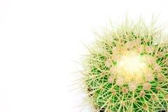 Изолированный кактус в стручке Стоковые Изображения RF