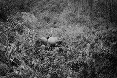 Изолированный китайский фермер с животными в природе Стоковая Фотография
