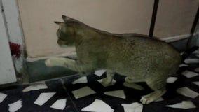 изолированный котенок играя белизну видеоматериал