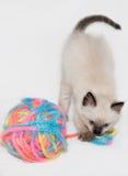 изолированный кот играющ пряжу стоковое изображение rf