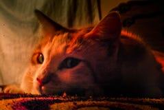 Изолированный кот стоковое фото rf