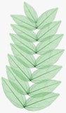изолированный макрос листьев Стоковое фото RF