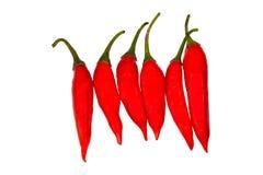 Изолированный перец chili с белой предпосылкой стоковые фото