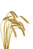 изолированный пук берет пшеницу на острие Стоковые Фото