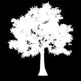 Изолированный силуэт взгляда со стороны дерева - бело- вектор иллюстрация штока