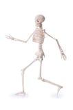 Изолированный скелет Стоковые Изображения