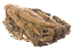 изолированный сохраненный мустард стоковое изображение rf