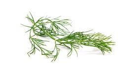 изолированный фенхель ветви Стоковое Изображение