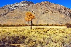 изолированный хлопок Стоковое Фото