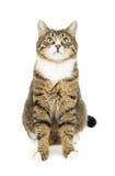 изолированный экземпляр кота смотрящ космос вверх стоковые фотографии rf