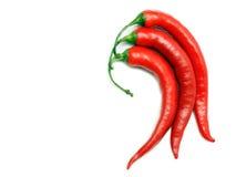 изолированный chili перчит белизну Стоковые Изображения RF