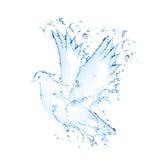 Изолированный Dove стоковые фотографии rf
