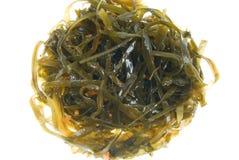 изолированный laminaria Стоковая Фотография RF