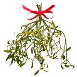 Изолированный Sprig Mistletoe Стоковые Изображения RF
