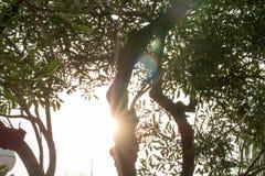 Изолят утра света refection дерева на лете предпосылки весной стоковая фотография rf