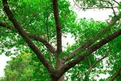 Изолят утра света refection дерева на лете предпосылки весной Стоковые Фотографии RF
