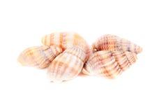 Изоляция съемки студии Shellfish на белизне стоковые фото