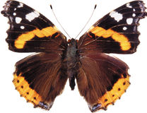 Изолированная бабочка известки, Стоковые Фото