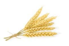 изолированная белизна пшеницы Стоковые Фото