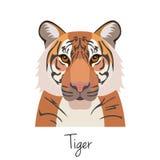 Изолированная голова тигра вектора Плоский стиль, объект шаржа Стоковые Изображения