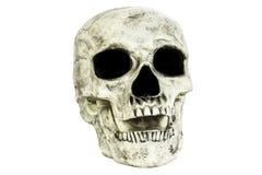 Изолированная голова черепа Стоковая Фотография RF
