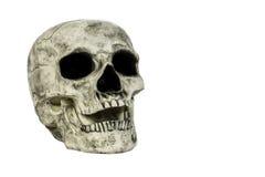 Изолированная голова черепа Стоковые Фото