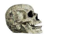 Изолированная голова черепа Стоковые Изображения RF