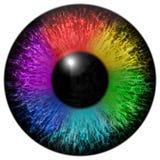 изолированная глазом отделенная радугой белизна тени Стоковое Фото
