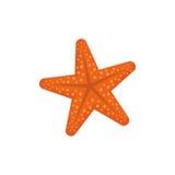 изолированная звезда моря Стоковое Изображение