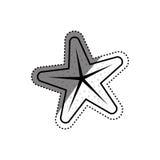 изолированная звезда моря Стоковые Изображения