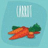 Изолированная зрелая морковь овощей корня вся и отрезок Стоковое Изображение