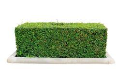 Изолированная изгородь стоковое изображение rf