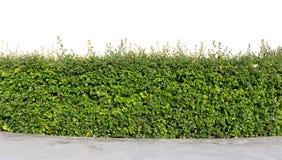 Изолированная изгородь стоковое изображение