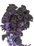 Изолированная листовая капуста Стоковое Фото