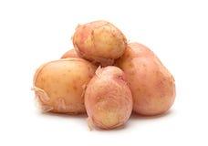 Изолированная картошка Брайна молодая Стоковая Фотография RF