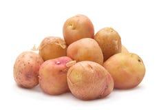 Изолированная картошка Брайна молодая Стоковая Фотография