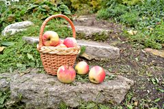 изолированная конструкция корзины d 3 яблок Стоковое Изображение RF