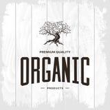 Изолированная концепция логотипа оливкового дерева винтажная Стоковая Фотография