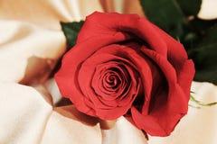 Изолированная красная роза на золотой предпосылке, винтажных оттенках, конце вверх Стоковая Фотография RF