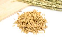 Изолированная куча сухого сырцового зерна неочищенных рисов Стоковая Фотография
