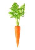 Изолированная морковь Стоковое Фото