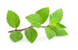 изолированная мята листьев стоковое изображение rf