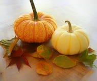 изолированная осенью белизна тыквы Стоковая Фотография RF