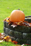 изолированная осенью белизна тыквы стоковые изображения
